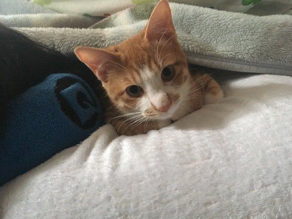 布団の間に居る猫