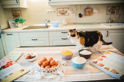 猫用のご飯の準備とカウンターの上の猫