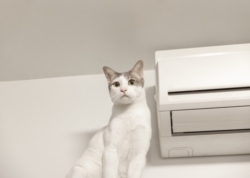 エアコンと猫