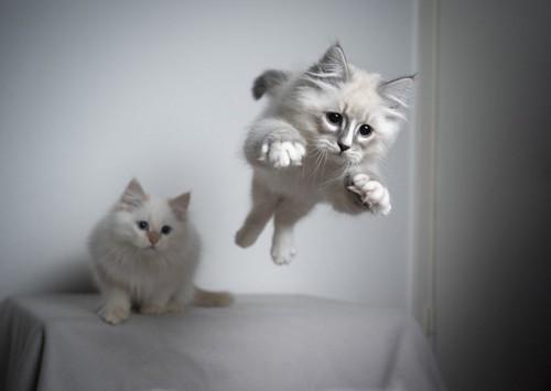ジャンプする猫と見つめる猫