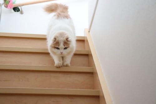 階段を降りていく猫