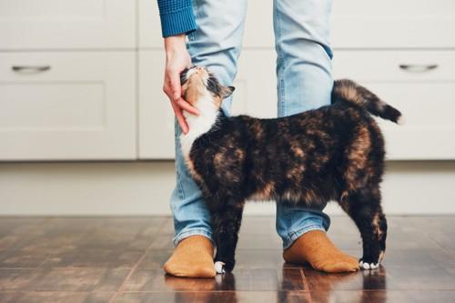 足元にすり寄る猫