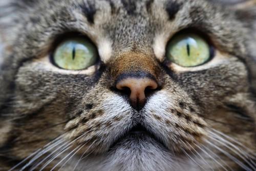 緑の目の猫ひげ袋
