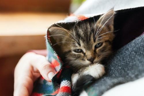 ストールにくるまって飼い主さんに抱かれる子猫