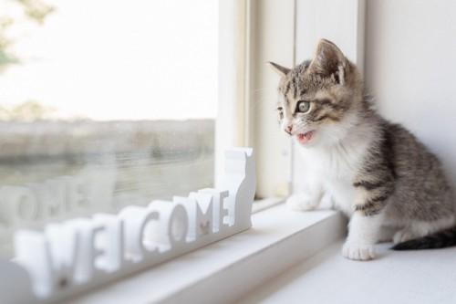窓の外を眺める子猫