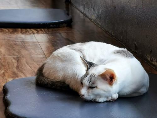 床に敷かれたマットの上で眠る猫