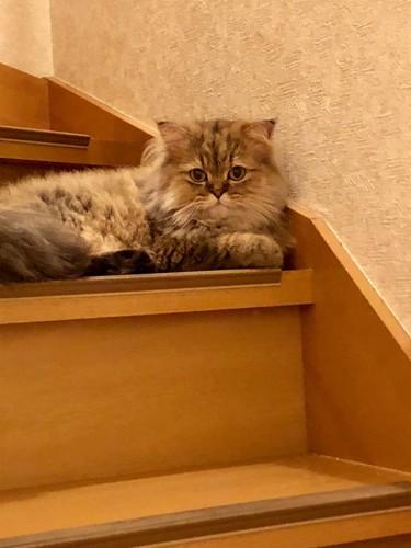 階段でくつろぐ猫