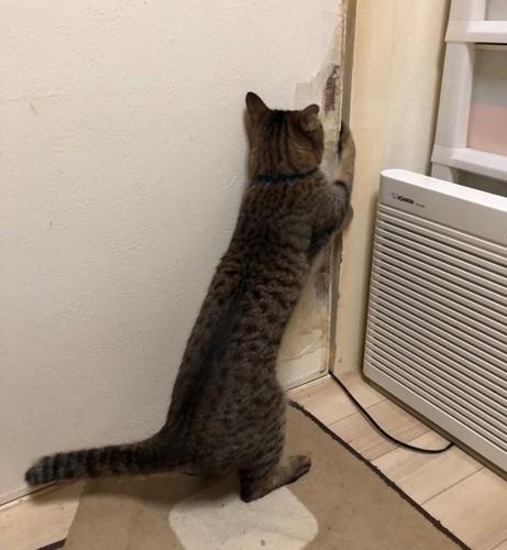 立ち上がって扉を開ける猫
