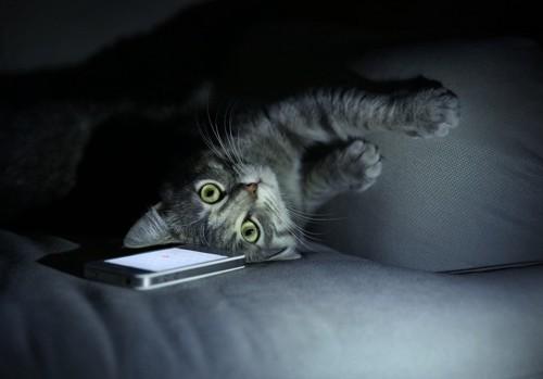 お腹を向けてこちらを見る猫