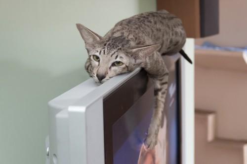 テレビの上に乗って眠る猫