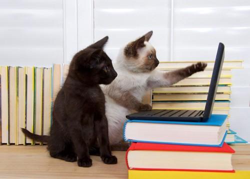 PC作業をする猫たち