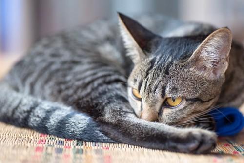 茣蓙の上の猫