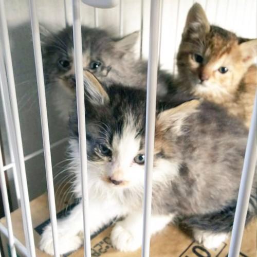 しげみ家族子猫たち