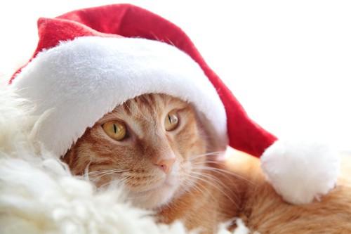 サンタの帽子を被っている茶トラ猫