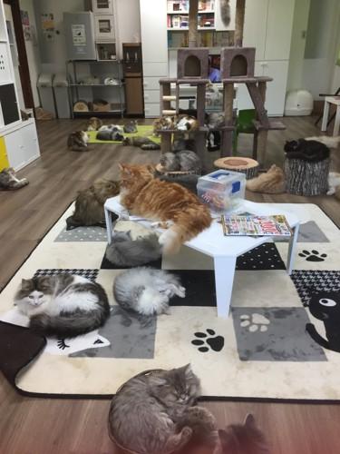 店内の様 奥行きが広く猫がのんびりと過ごしています