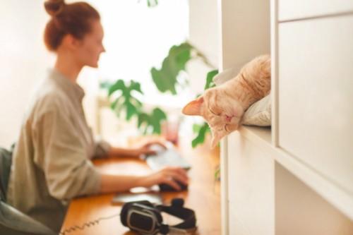 眠る猫とパソコンを使う人