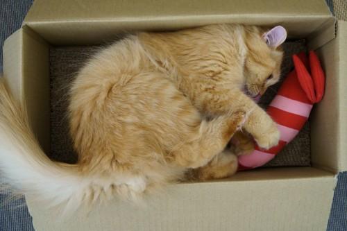 箱の中でマタタビに喜ぶ猫