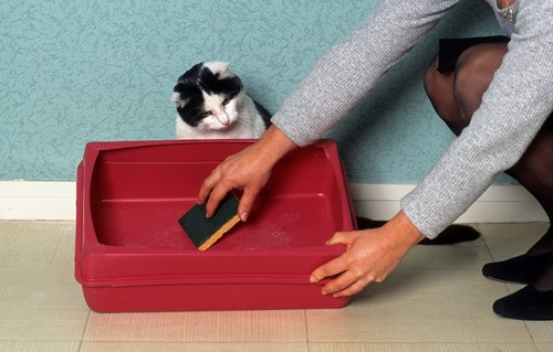 トイレを掃除する飼い主