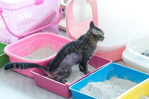 たくさんの猫トイレ