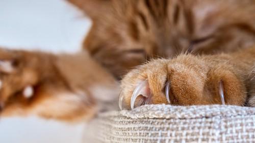 爪を出して眠る猫