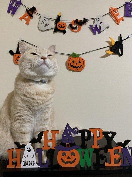 ハロウィンの飾りと猫