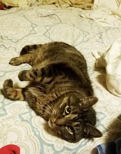 ベッドに寝転んでこちらを見上げるオスカー