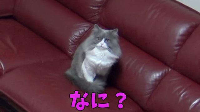 カメラ目線な猫