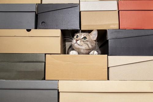 箱に埋もれた猫