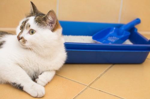 猫用トイレのそばでくつろぐ猫
