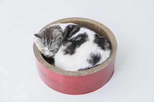 爪とぎの中で丸くなる猫