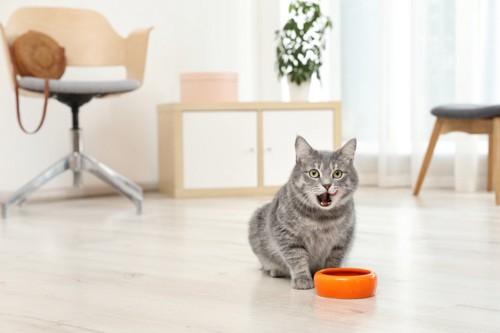 フードボウルの前で鳴く猫