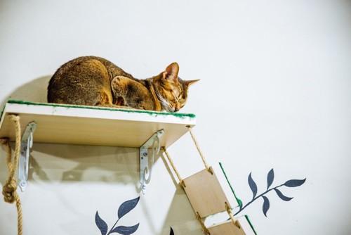棚に乗っている猫