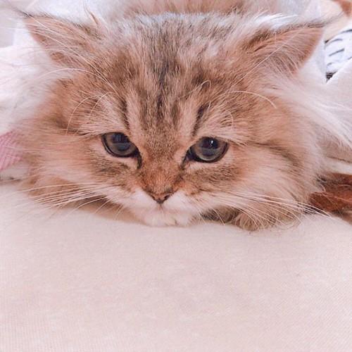 目を閉じている猫の横顔
