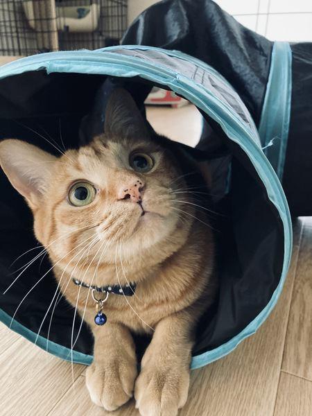 トンネルの中から上を見る猫