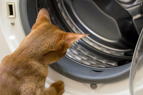 洗濯機を覗き込む猫の後ろ姿