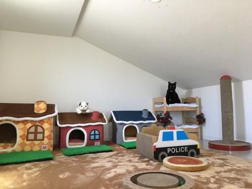 猫専用部屋の様子