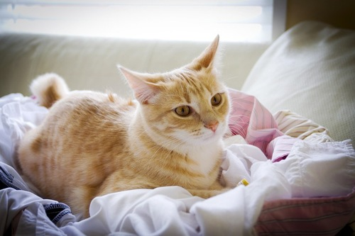 洗濯物に座る猫