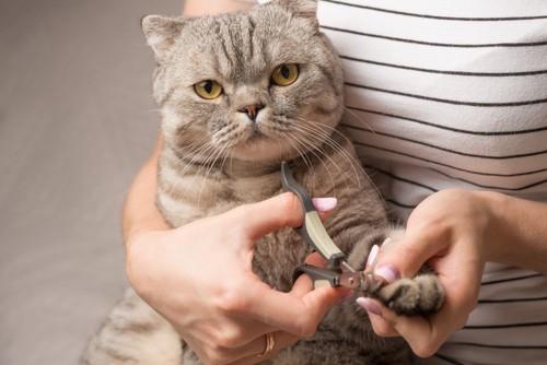 猫の爪を切る人