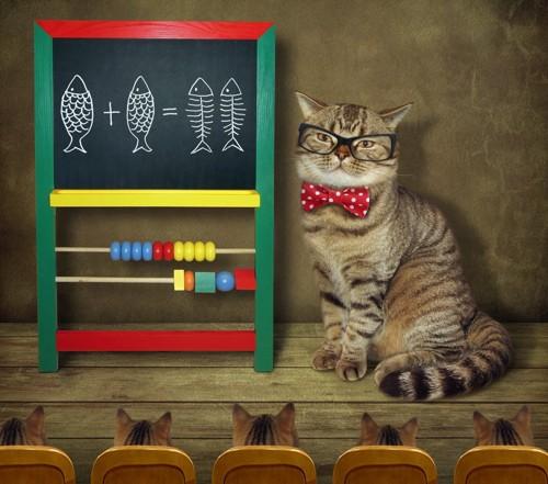 算数を教える猫
