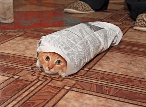 くるまれる猫