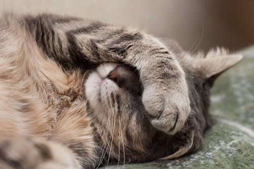 前足で顔を隠して眠る猫