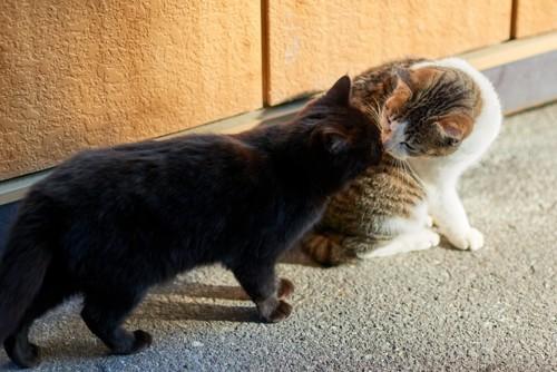 挨拶している猫たち