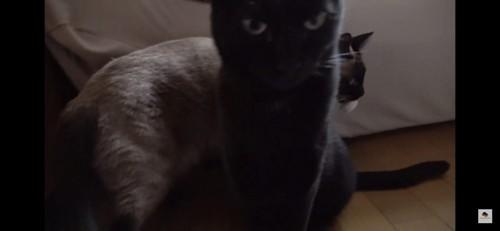 ドアップな黒猫