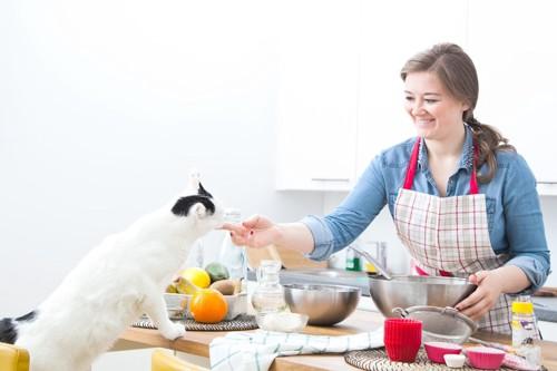 料理をする女性と猫