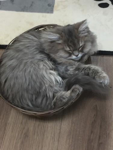 カフェ内で気持ちよさそうにかごの中で寝る猫