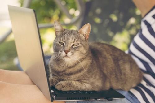 パソコンに乗る邪魔猫