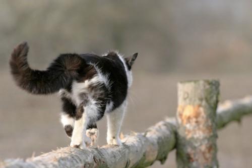 どこかへいく猫