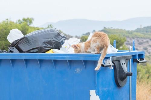 ゴミをあさる猫