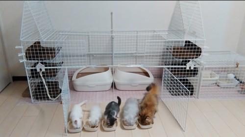 #DIY猫型ハウス#