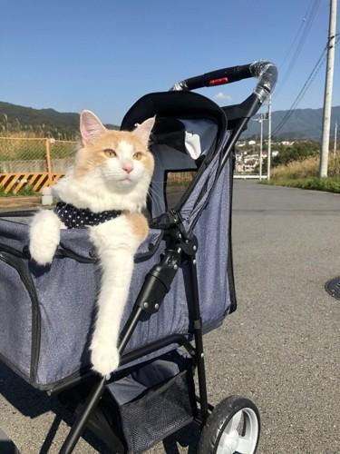 カートに乗る猫